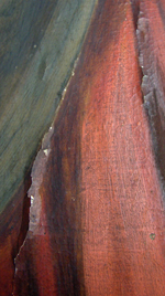 schilderijenrestauratie - opstaande verf